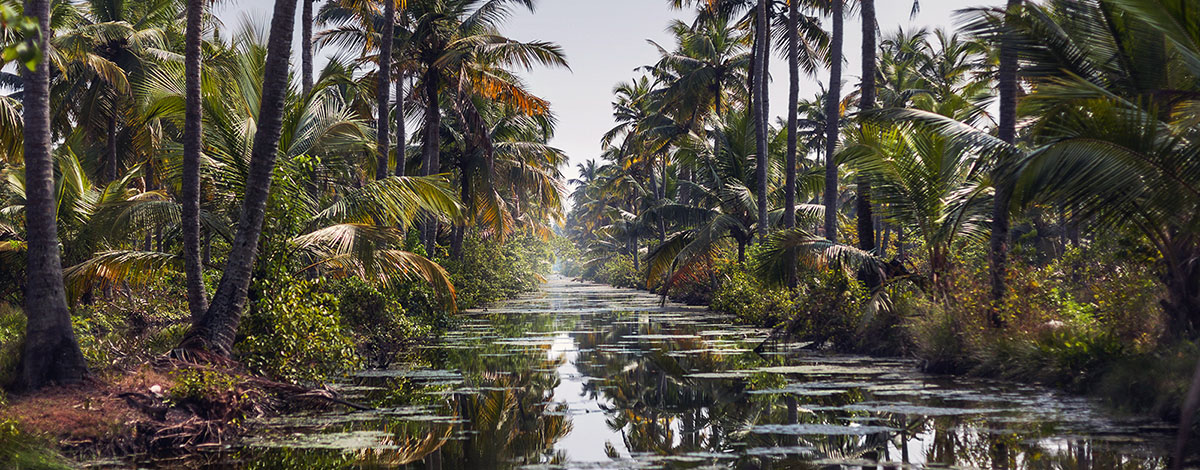 Een rondvaart door de backwaters van Kerala